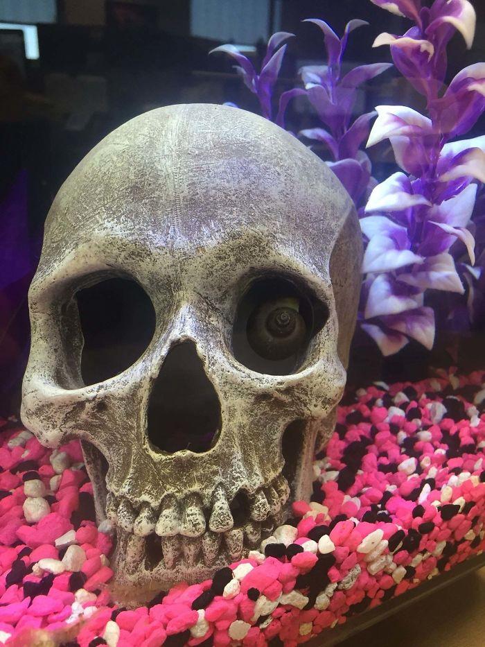 innocent things looking scary skull snail eye