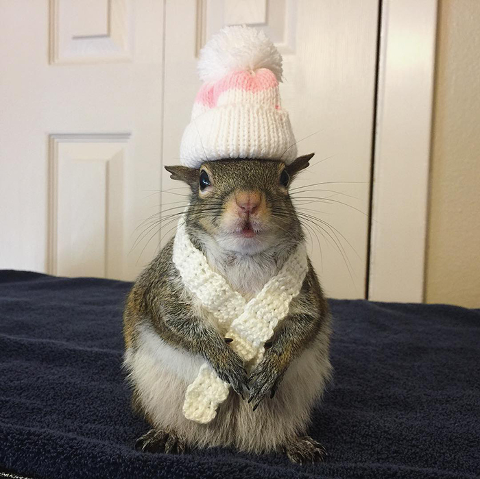 jill the squirrel fashionista pet
