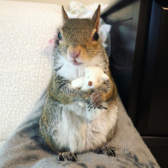 jill the squirrel loves her teddy bear