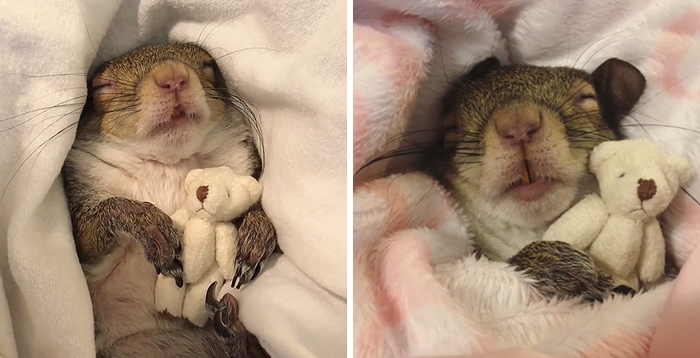 jill the squirrel napping with her teddy bear