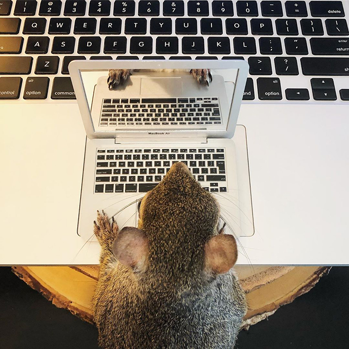 jill the squirrel tiny laptop