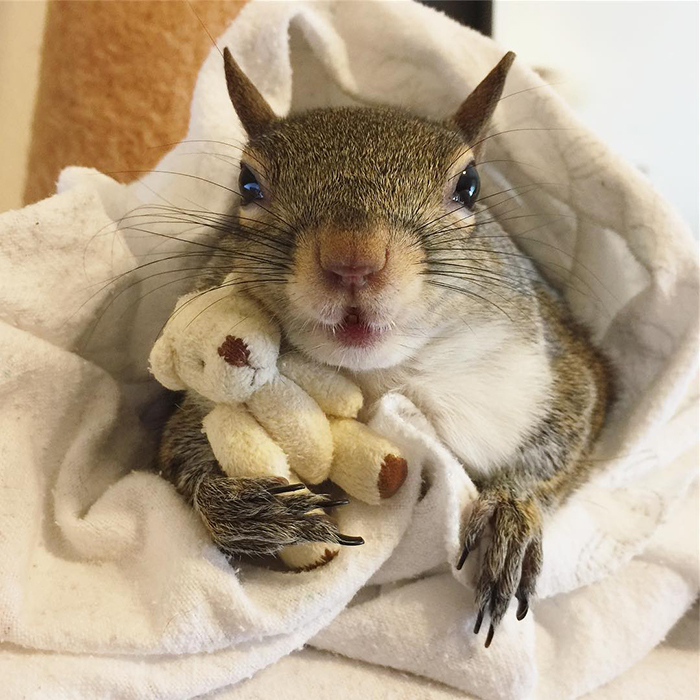 jill the squirrel with her teddy bear