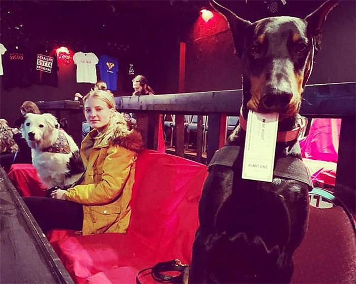 k9 cinemas dog-friendly movie theater