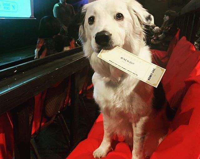 k9 cinemas movie theater for dogs