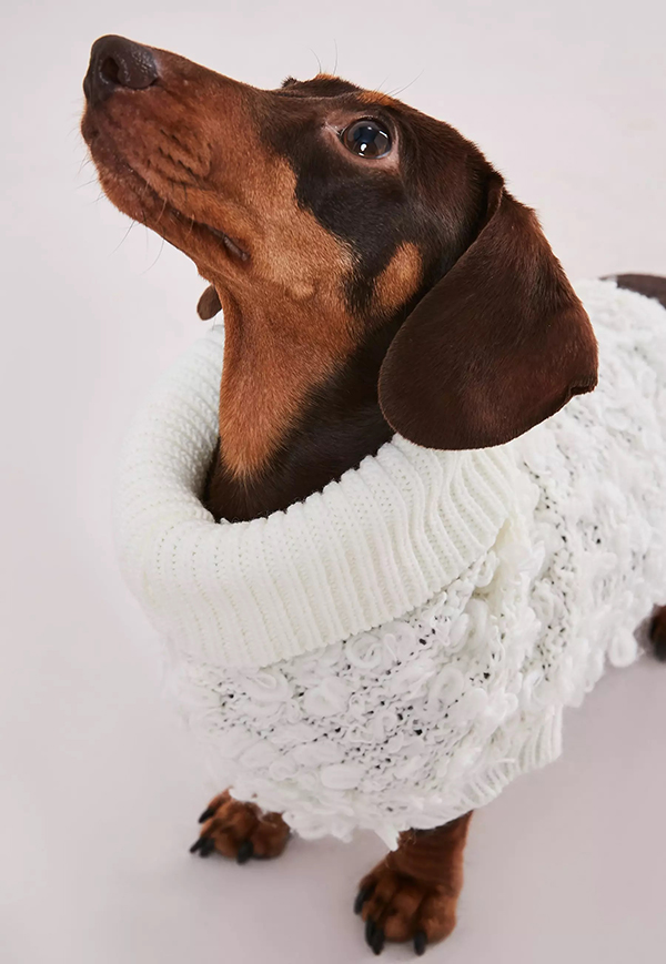 matching knitted jumpers for dogs and their owners hotdog in a boucle jumper