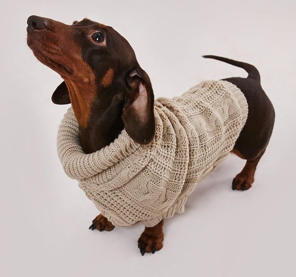 matching knitted jumpers for dogs and their owners stone jumper on dog