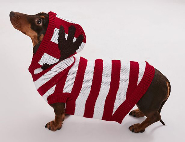 matching knitted jumpers for dogs and their owners striped reindeer sweater