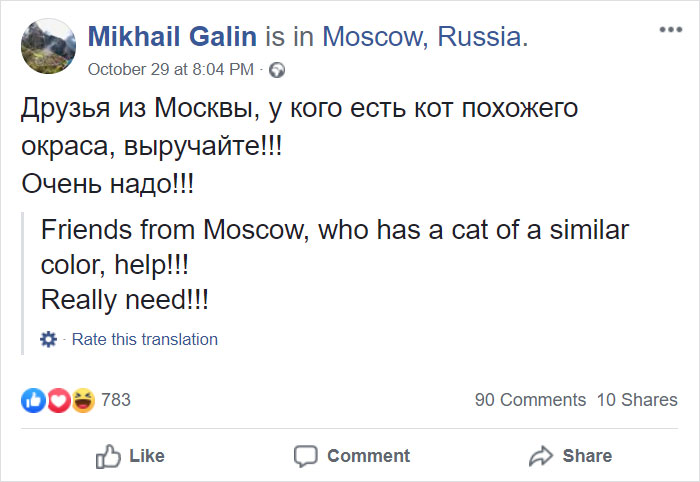 mikhail galin asks friends sneaking cat on flight
