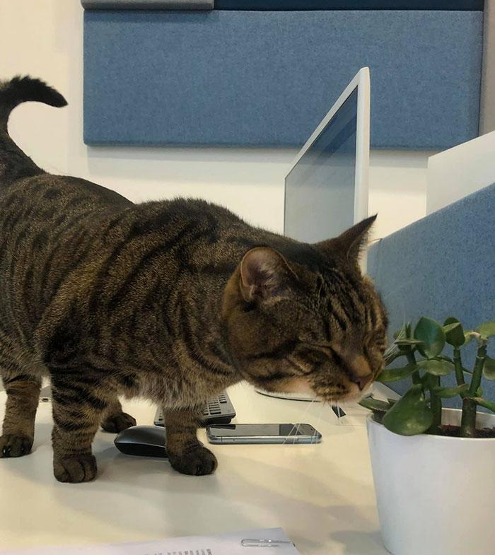 mikhail galin viktor chubby cat