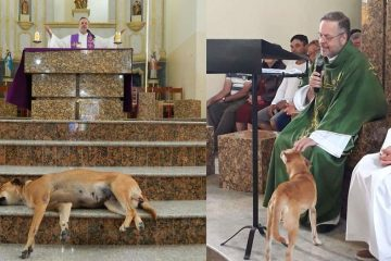 priest stray dogs