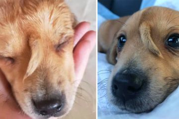 puppy with tail on forehead