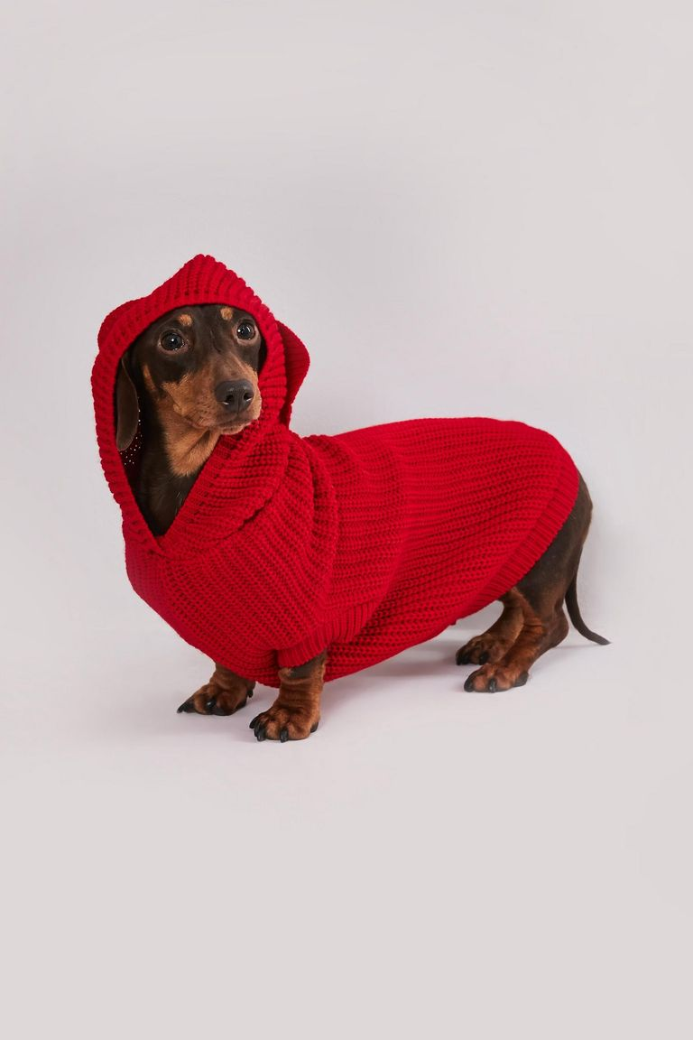 red ribbed jumper for dogs