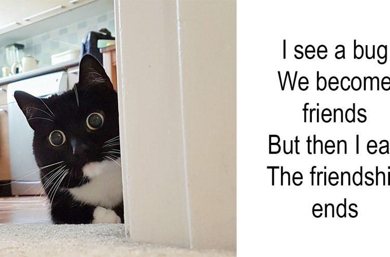 zelda the cat