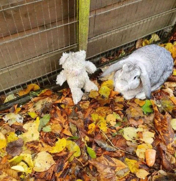 Abandoned Rabbit Named Nigel and His Teddy Bear
