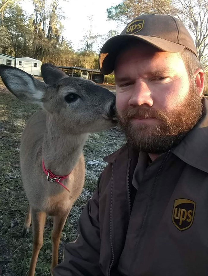 Adorable Deer