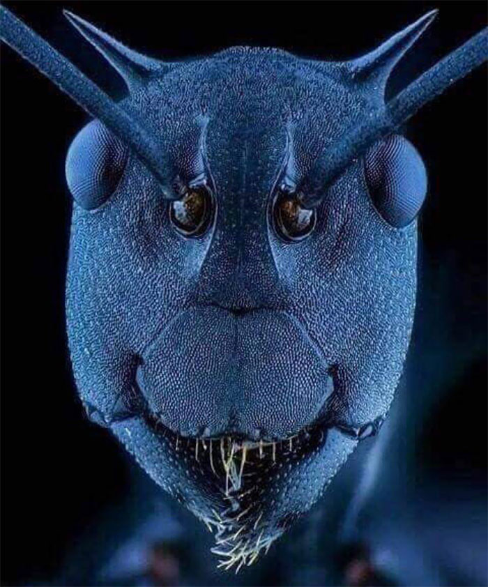 Ant Face Under Electron Microscope