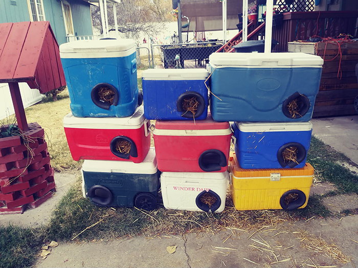 Cat Shelters Made Out of Discarded Coolers Different Colors