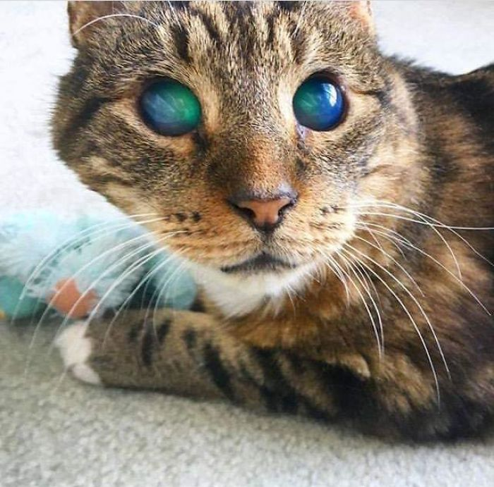 Fascinating Things Blind Cat with Amazing Eyes