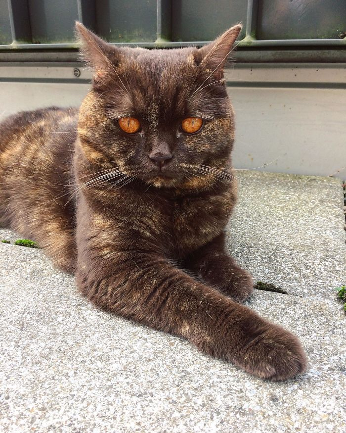 Fascinating Things Cat with Sauron's Eyes