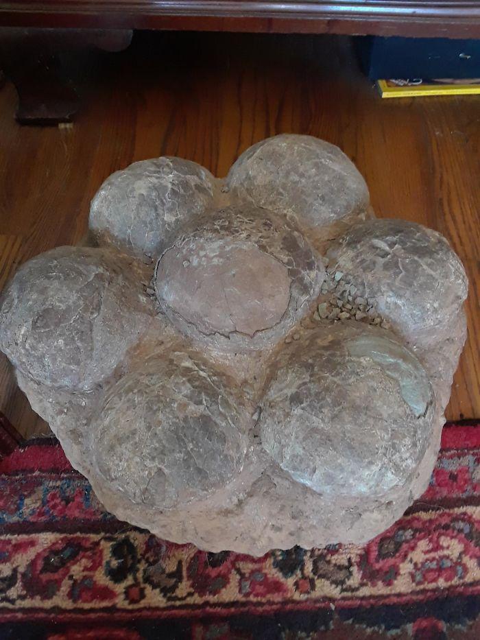 Fascinating Things Clutch of Dinosaur Eggs