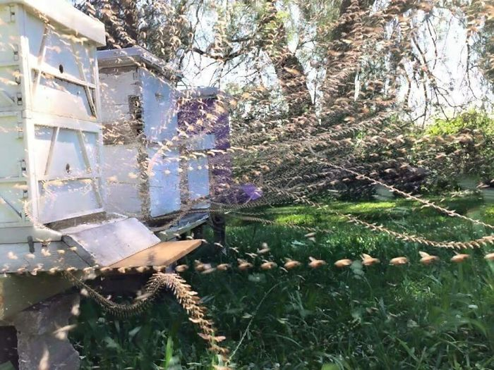 Fascinating Things Timelapse Photo of a Beehive