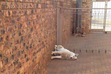 Funny dog sleeping positions