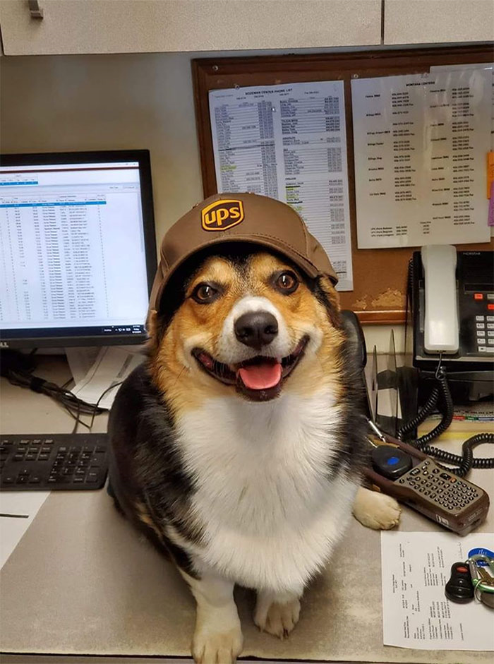 Furry UPS Employee