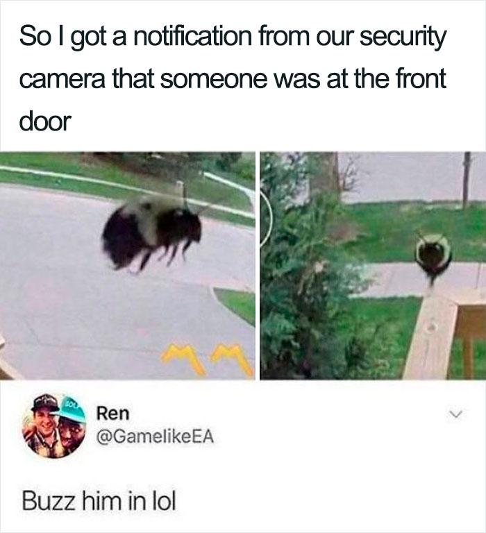 Hilarious Puns Bee
