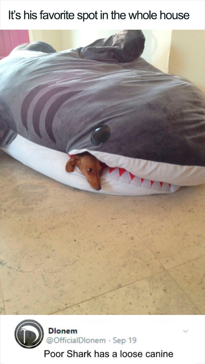 Hilarious Puns Shark
