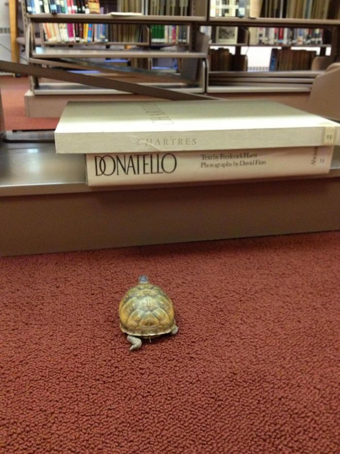 Lost Turtle Found