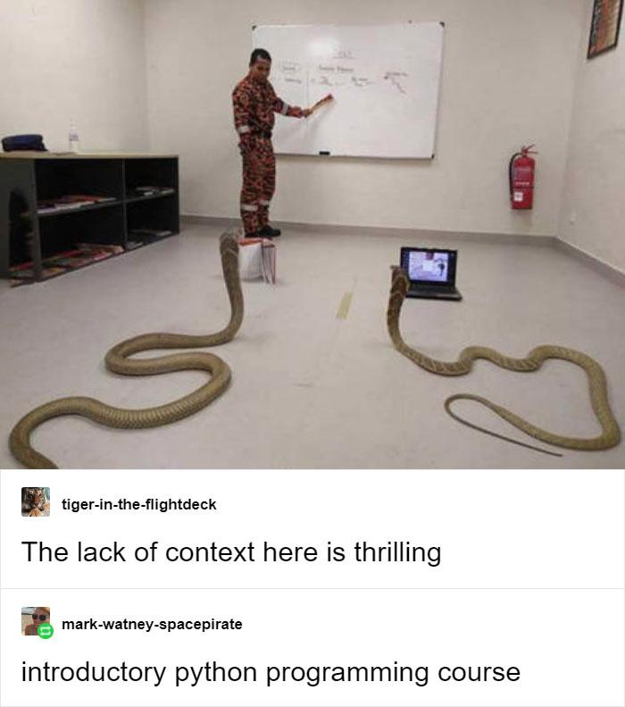 Python Pun