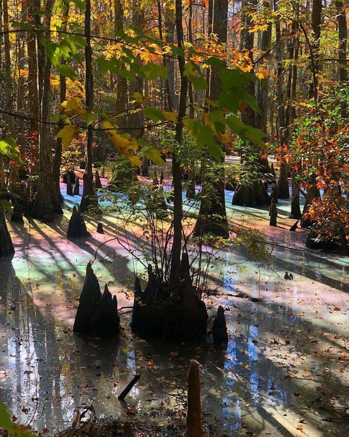 Rainbow Pool in the Woods
