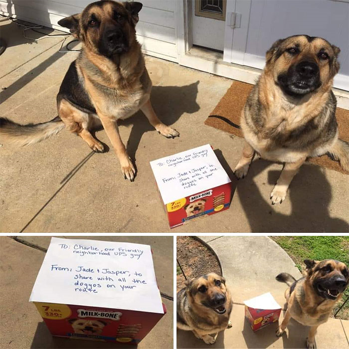 Two Dogs and Treats