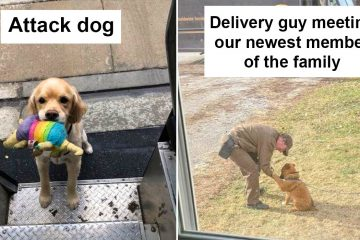 UPS Drivers and dogs