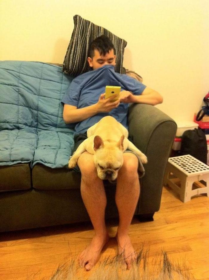 awkward sleep posture dog boyfriend lap