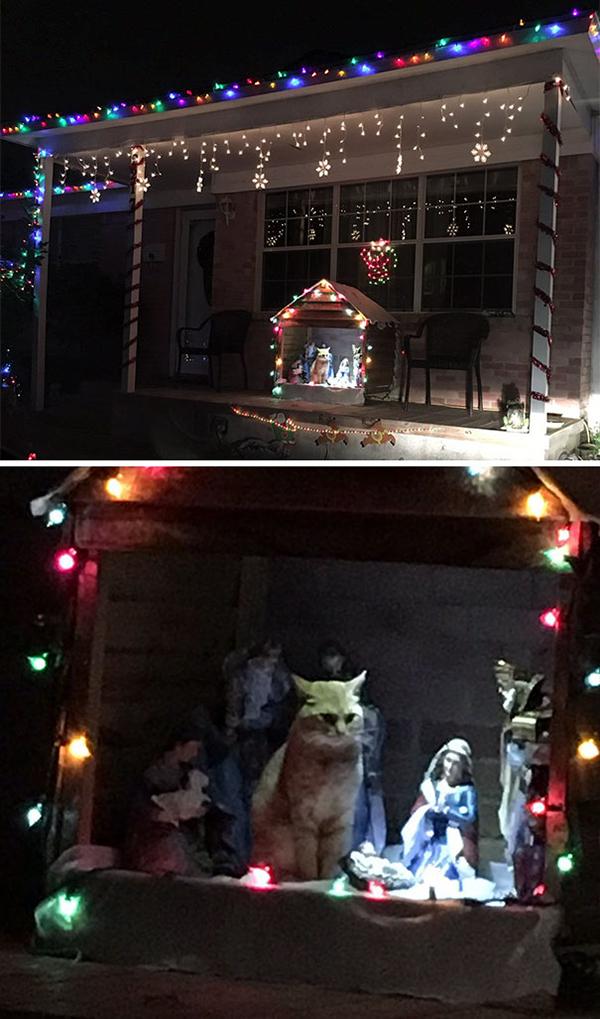 cat chilling in nativity decor
