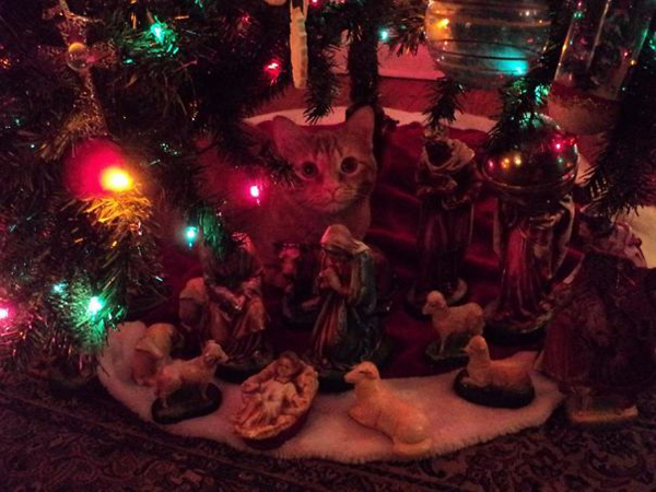 cat decided to be part of the nativity scene