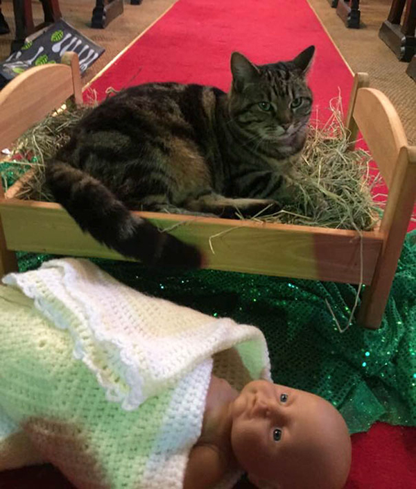 cat evicts baby jesus from the manger