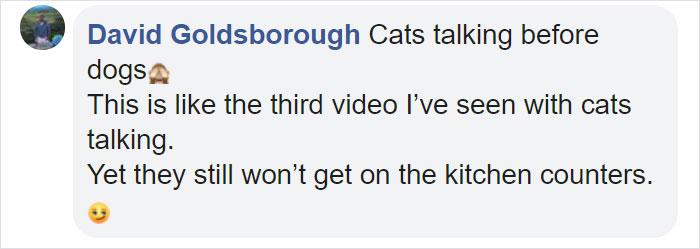 cat says well hi comment david