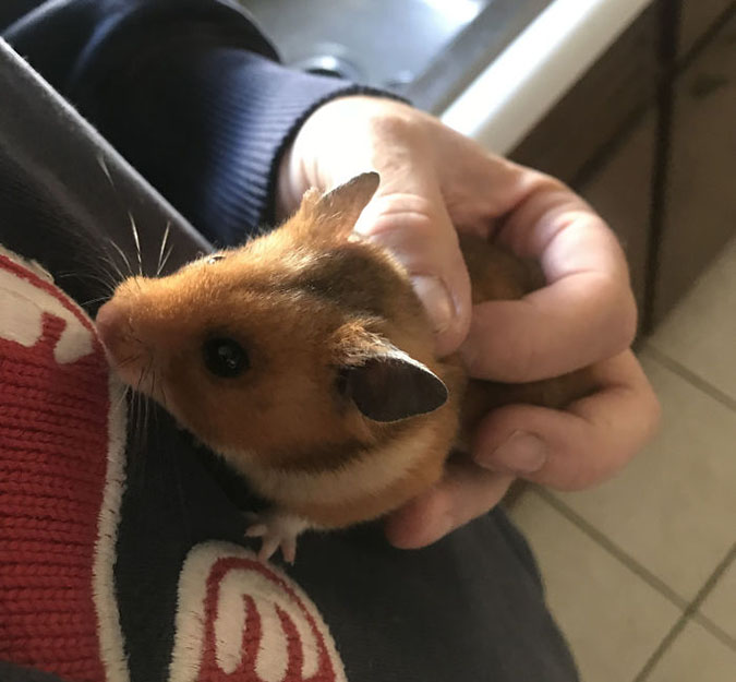 chester the missing hamster