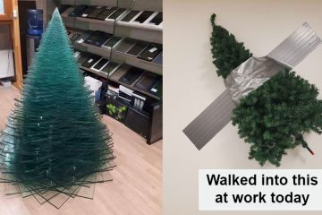 decorating christmas trees