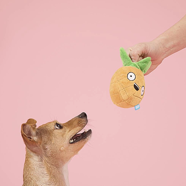 dog looks excitedly at the pineapple BarkBox plush toy