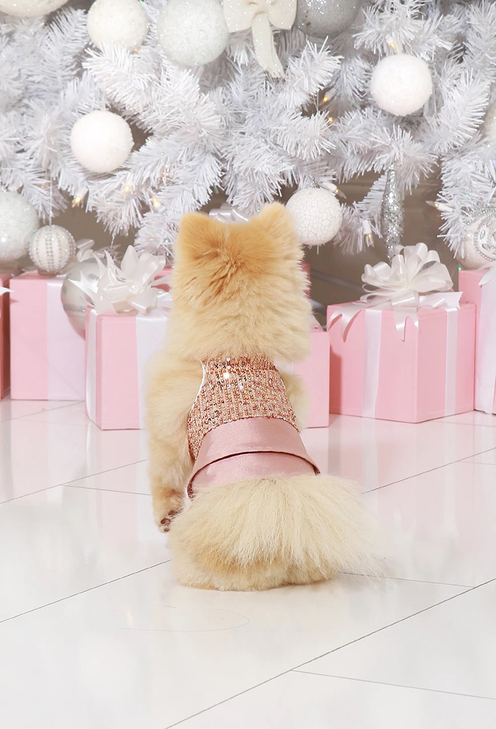 dog party dress as seen from behind