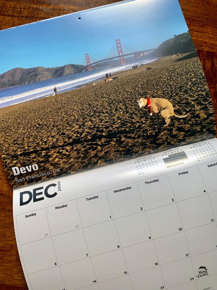 dog pooping calendar dec