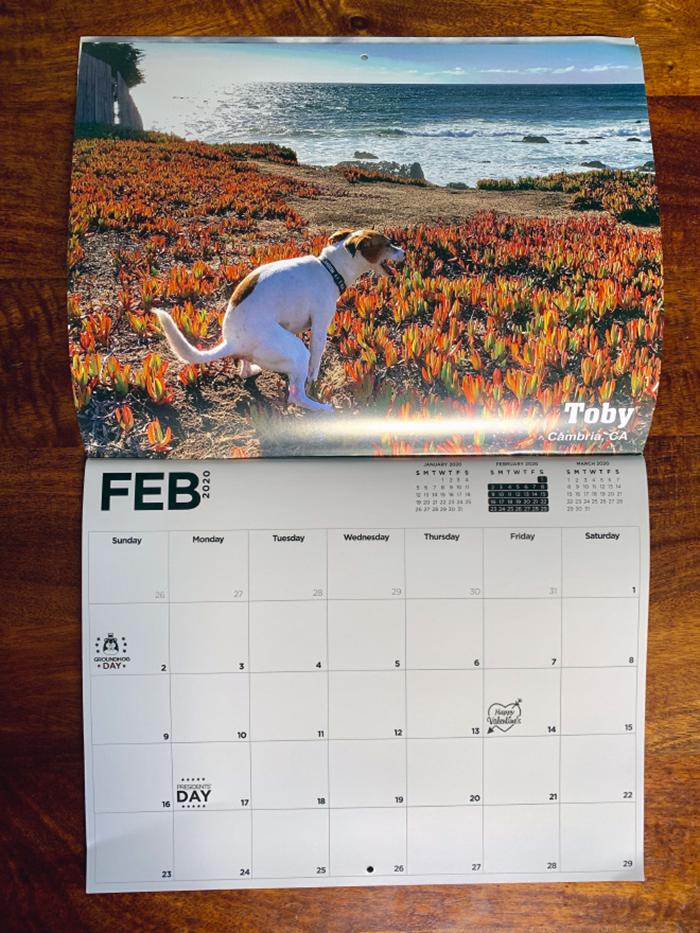 dog pooping calendar feb