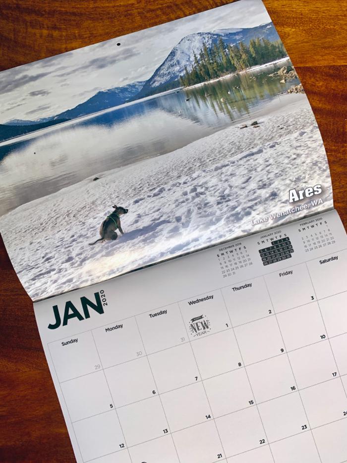 dog pooping calendar jan