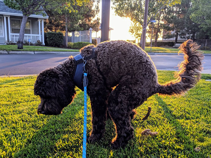 dog poops in front lawn