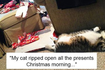 dogs and cats destroyed Christmas