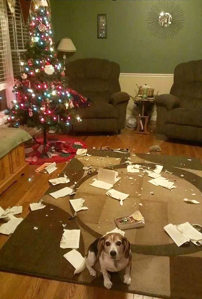 dogs and cats destroying christmas books chewed up