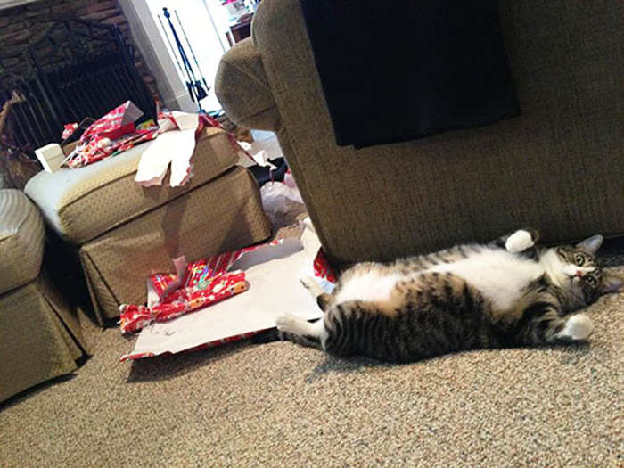 dogs and cats destroying christmas gifts ripped open